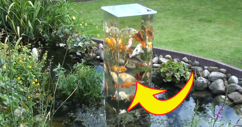 Watch how these fish react to an upside down fish tank for Koi pond maker