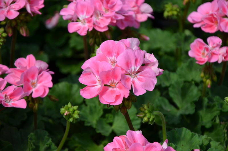 4 Plants That Will Keep Mosquitoes Away From You And Your